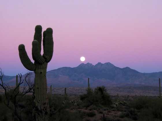 Sonoran Moonrise by FreeImages.com/Lisa Langell